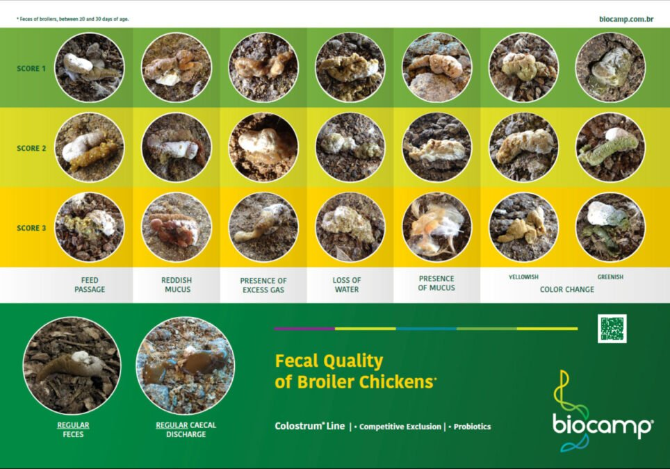 Evaluation of Faecal Quality of Broiler Chickens*