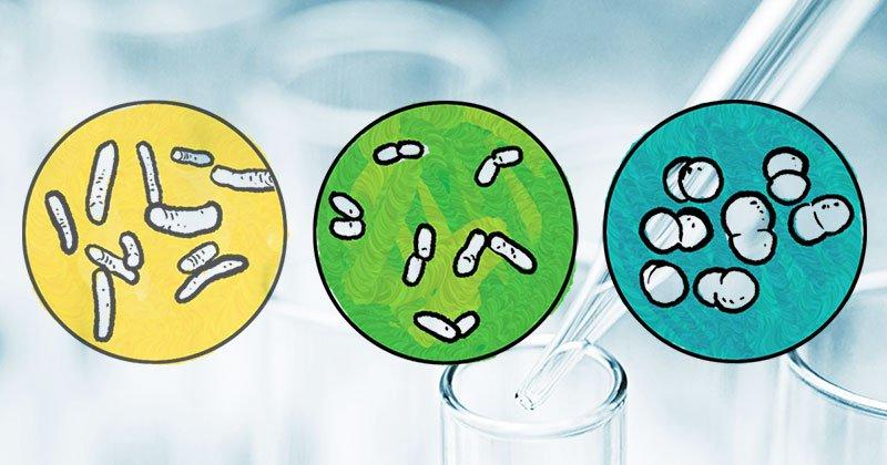 Probióticos são todos iguais?