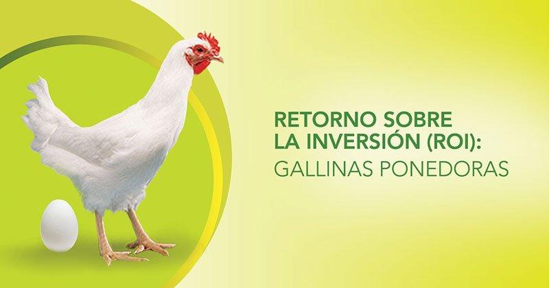 Retorno sobre la inversión (ROI): gallinas ponedoras
