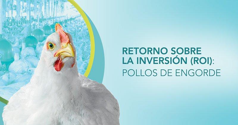 Probióticos para pollos de engorde: ¿cómo calcular el ROI?