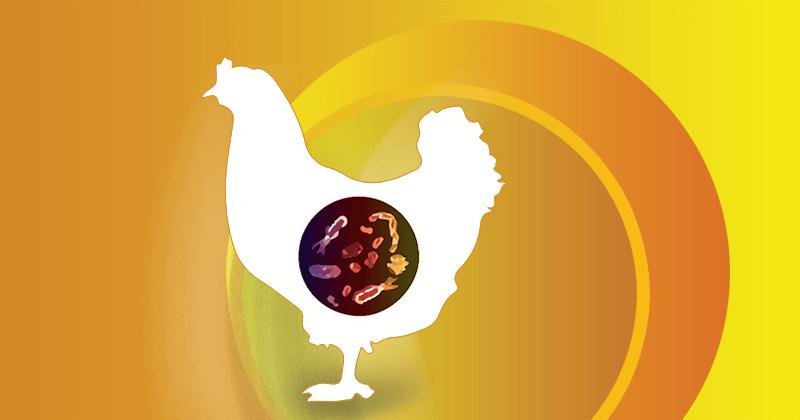 Producción de huevos en el primer semestre: atención a las enteritis