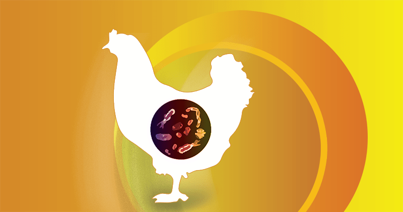 Egg Production in the First Half of the Year: Attention to Enteritis