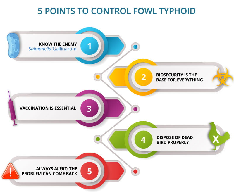 5 points to control Fowl Typhoid