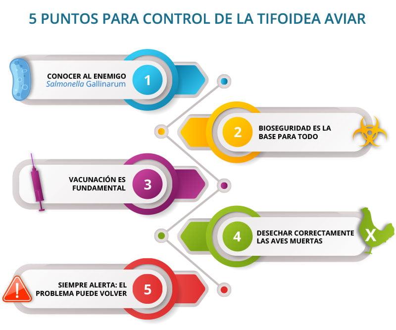 5 puntos para control de la Tifoidea Aviar