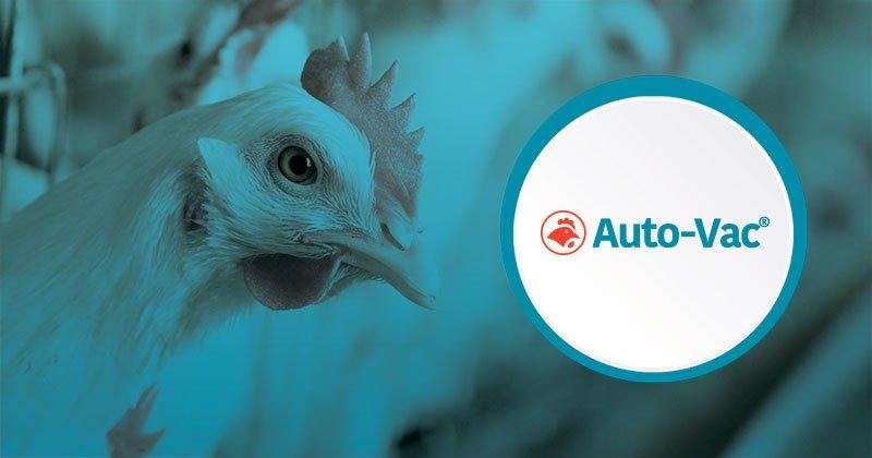 Vacunas autógenas: una herramienta disponible para uso en las granjas